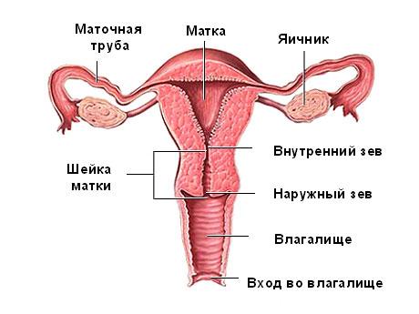 Тампон в вагине